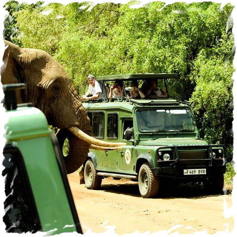 private safaris in africa