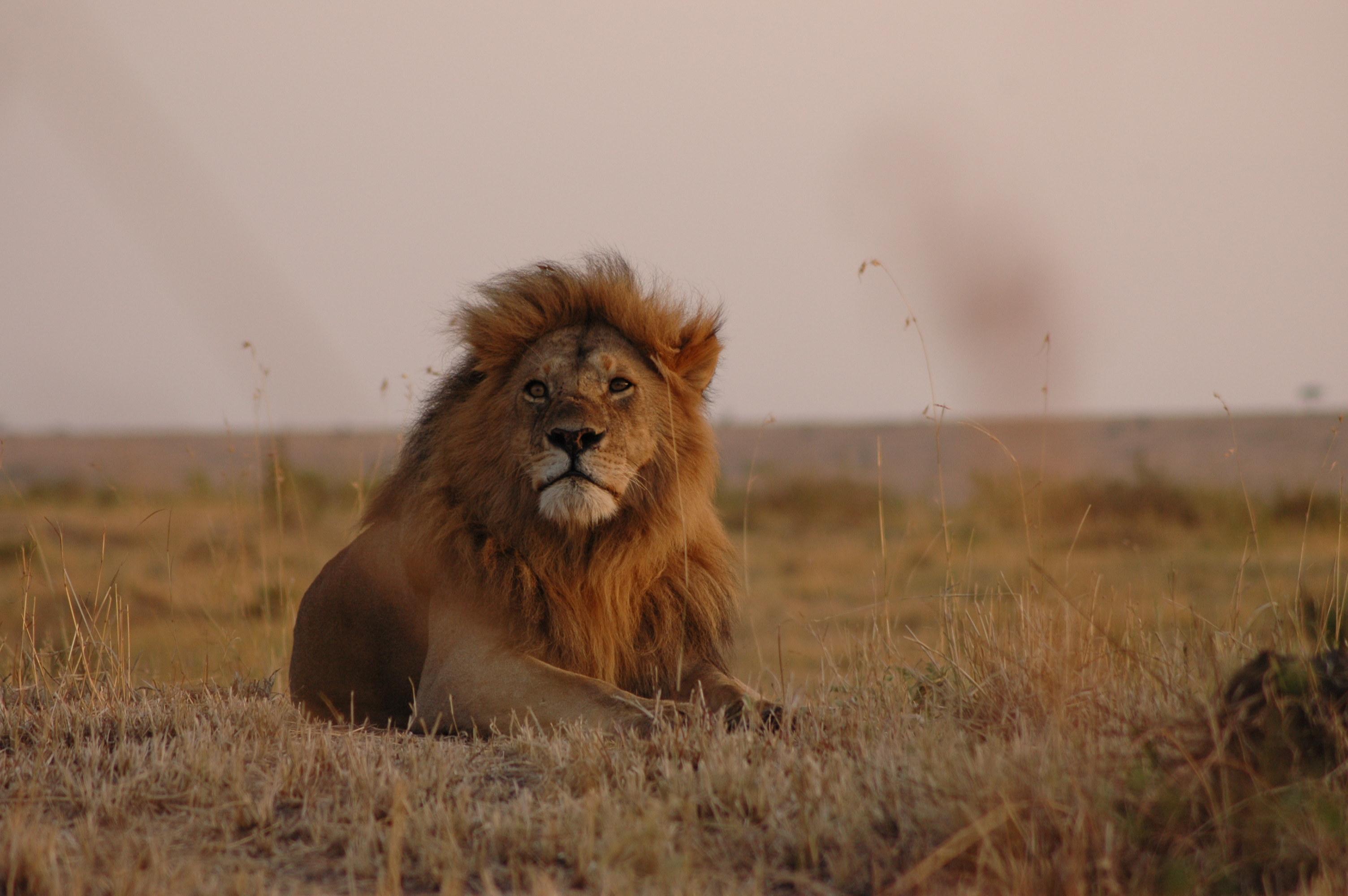 how much is a safari in tanzania